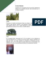 ARBOLES EN PELIGRO DE EXTINCION.docx