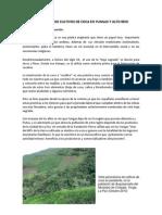 AMPLIACION DE CULTIVOS DE COCA EN YUNGAS Y ALTO BENI finaaal.docx