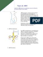 Tipos de ARN.docx