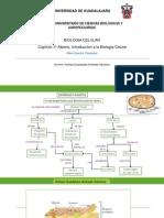 MAPA CONCEPTUAL .pdf