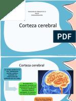 Corteza cerebral final.pdf