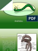 Anélidos.pptx