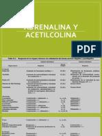 Adrenalina  y acetilcolina.pptx