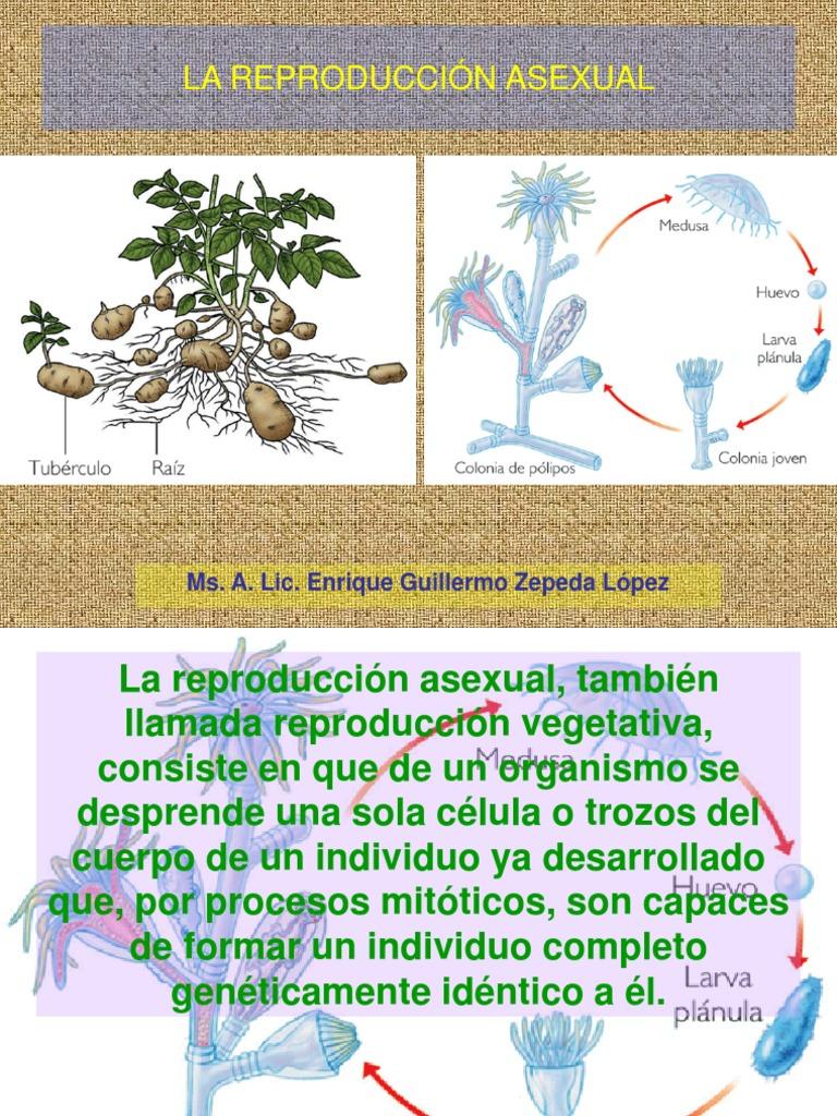 Reproduccion de helechos asexual propagation