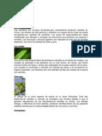 Plantas con semillas.docx