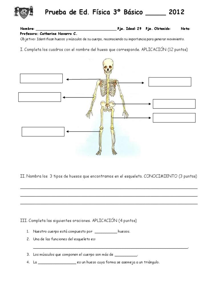 Lujoso Nombres De Los Huesos Del Esqueleto Ideas - Imágenes de ...