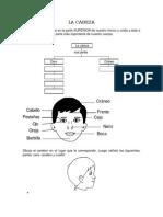 CUERPO HUMANO Y SUS PARTES.docx