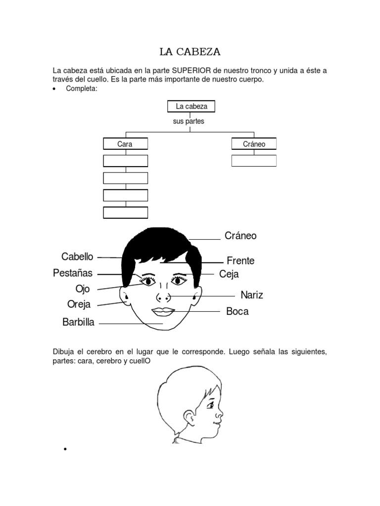 Contemporáneo Las Partes Del Cuerpo Del Cuello Componente - Anatomía ...