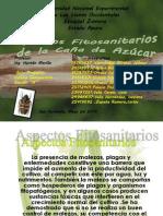 Aspectos Fitosanitarios de la Caña de Azucar.pptx