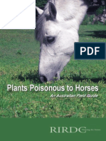 Plants Poisonous to Horses