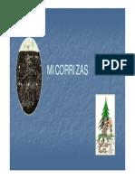 micorrizas presentacion.pdf