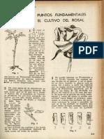 Puntos fundamentales en el cultivo del rosal.pdf