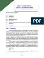 PARAGANGLIOS.pdf