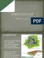 (((PARED CELULAR)))Presentacion.pptx