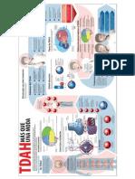 TDAH-interesante-visual-y-completa-infografía-.pdf