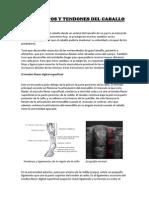 LIGAMENTOS Y TENDONES.pdf