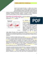 ALUMBRAMIENTO+NORMAL.docx