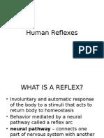 Human Reflexes