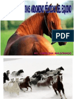 Digestivo de Equinos y Cerdos.ppt