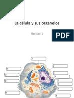 UNIDAD 1. La célula y sus organelos.pptx