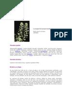 uso de plantas medicinales.docx