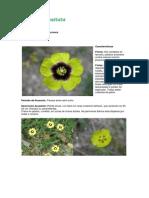 Tuberaria guttata.pdf