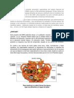 piramide alimenticia guatemala.docx