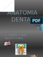 ANATOMIA DENTAL 1 SEMESTRE.pptx
