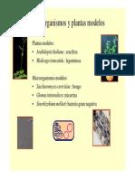 3o_Clase_fijacion_de_nitrogeno.pdf