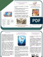 TRIPTICO.pdf