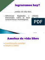 4 - Amebas de Vida Libre, Flagelados y Ciliados.ppt