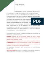 Conceptos, Tipologias y Funciones de la Familia.doc