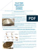 Information pamphlet on Hoof Wall Separation Disease.  Portrait page format