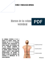 vertebras.pptx