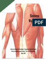 El Sistema Muscular.pdf