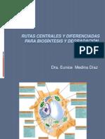 generalidadesdelmetabolismo.ppt