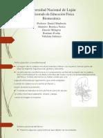 biomecanica de la cadera.pptx