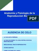 Anatomia y Fisiologia de la Reproduccion Bovina-Pre.ppt