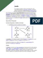 Base nitrogenada.docx