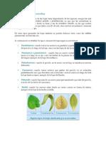 Tipos de hojas según su nervadura.docx