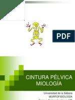 Cintura pélvica.ppt