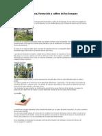Silvicultura.docx