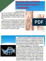 FARMACOLOGIA DEL SISTEMA REPRODUCTOR MASCULINO Y FEMENINO.pptx