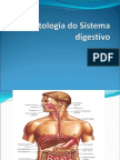 Aula 12, 13- Sistema Digestivo (1)