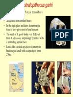 121australopithecus.pdf