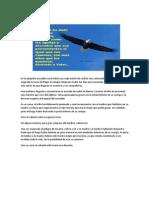 Volar_alto.pdf