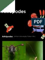 artropodes.ppt