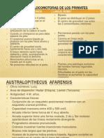 proceso de hominización2.pptx