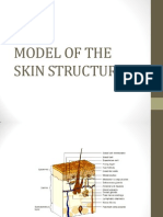 Model of the Skin Structure