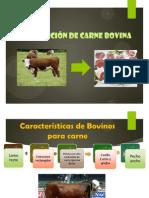 producción de carne vacuna o bovina.pptx